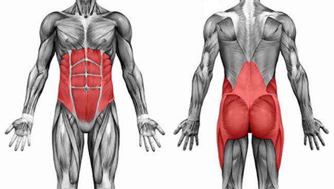 body core muscles