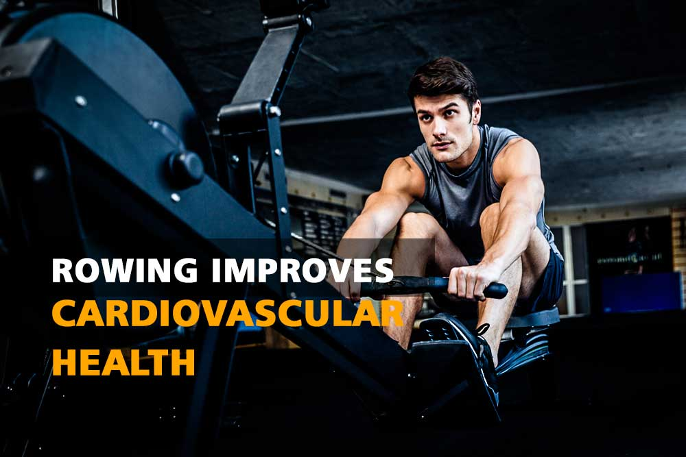 Rowing improves cardiovascular health
