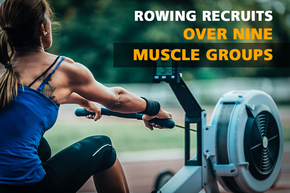 Rowing recruits over nine muscle groups