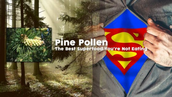 What are pine pollen?
