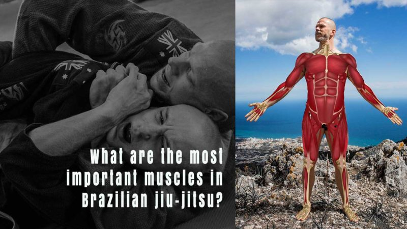 What are the most important muscles in Brazilian jiu-jitsu?